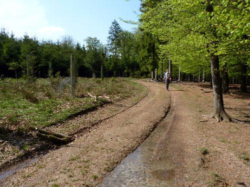 eerst dicht bos, dan een meer open gedeelte