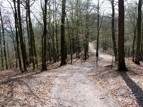 we naderen een kruispunt van brede bospaden