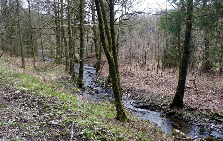 steeds weer langs de Ruisseau de Burnéchamps