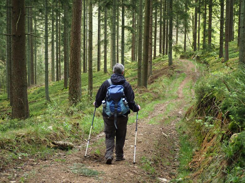 mooie route door prachtige bossen