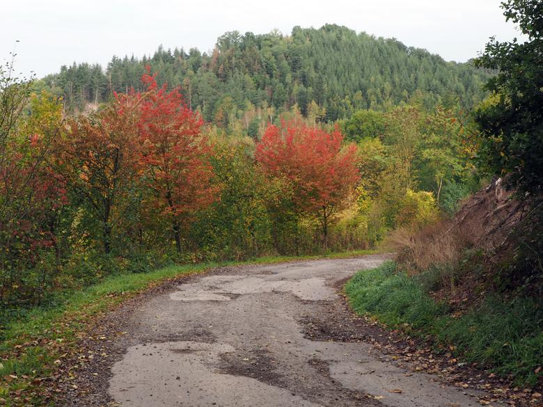 een fraai bosgebied langs de Ourthe