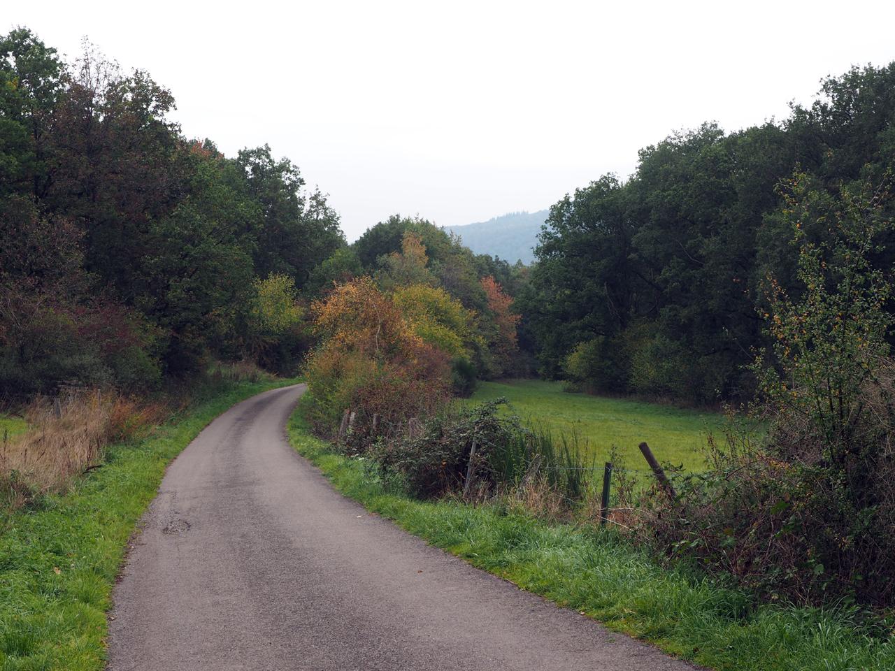 dicht bos en enkele weilanden boven op de bergrug