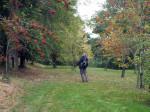 in het Arboretum Robert Lenoir