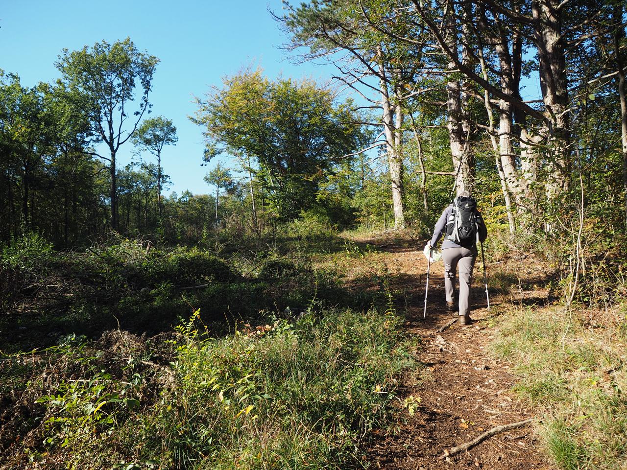 de eerste klim het bos in