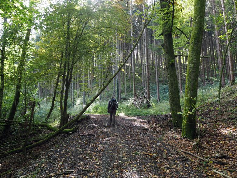 door een heel mooi bosgebied