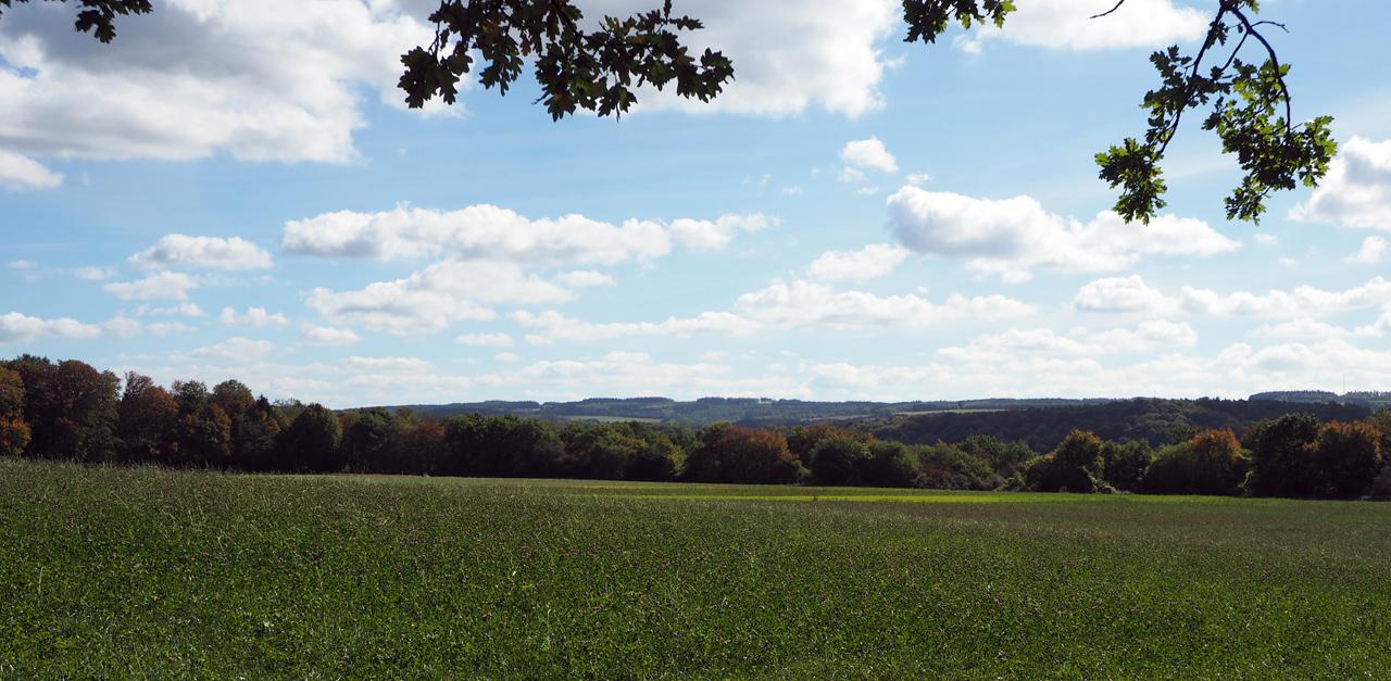 het uitzicht bij de bosrand