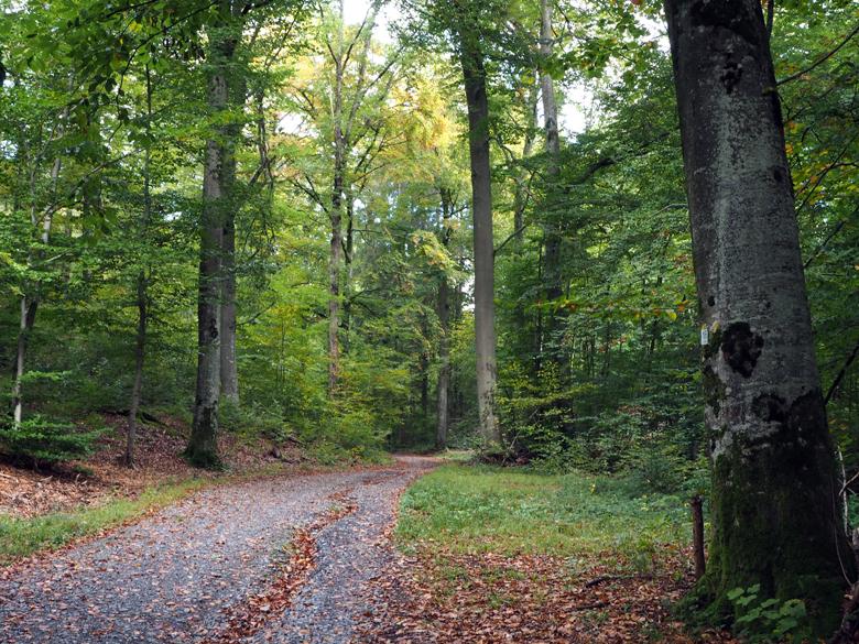 lange tijd door het dichte bos