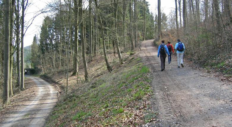 rechtsaf omhoog het bos in