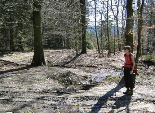 Op dit onduidelijk kruispunt in het bos was het even zoeken naar de juiste richting