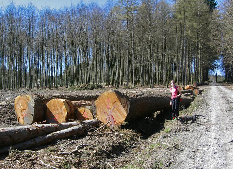 Er wordt overal aan bosonderhoud gedaan