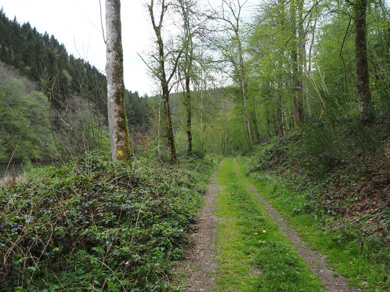 een mooi bospad na de parkeerplaats