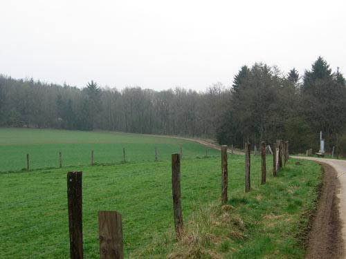 achter Bure richting de bosrand
