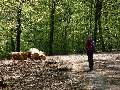 dan volgt een boswandelingetje