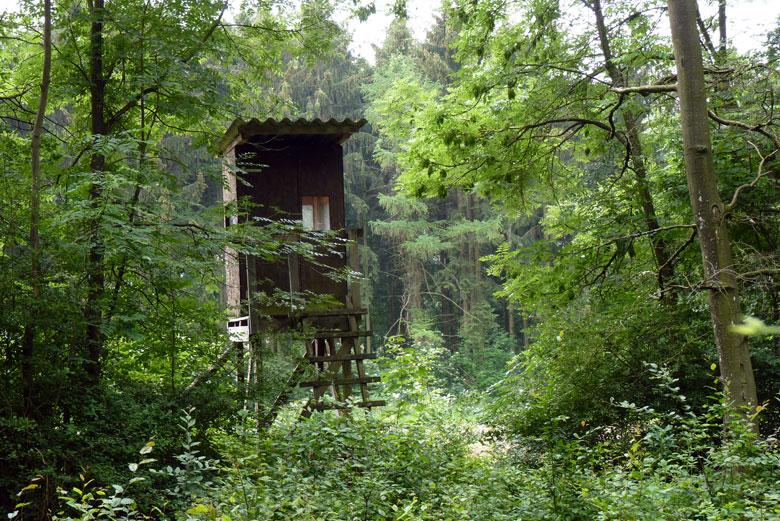 90% van deze route loopt in de schaduw door het bos