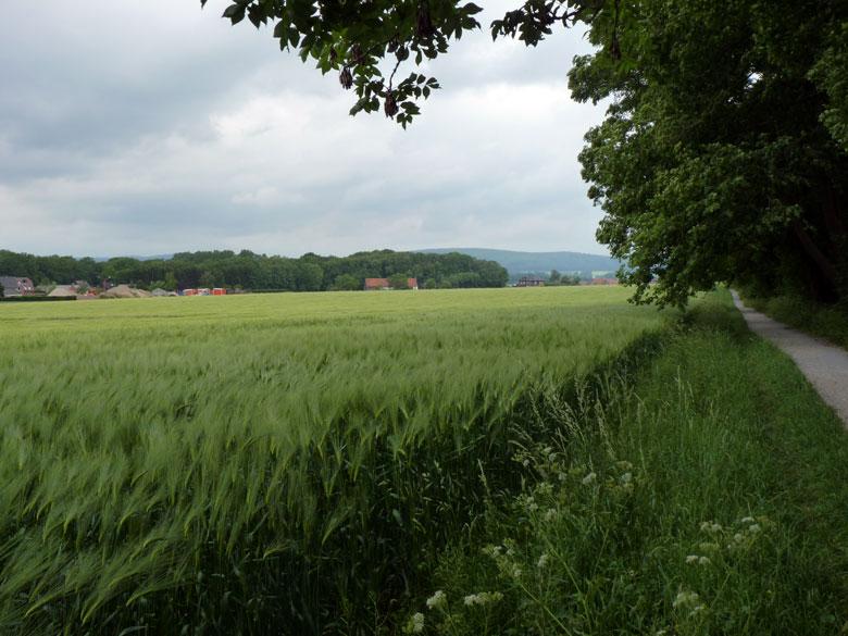 het pad langs de bosrand is op wandelkaarten aangemerkt als uitzichtpunt