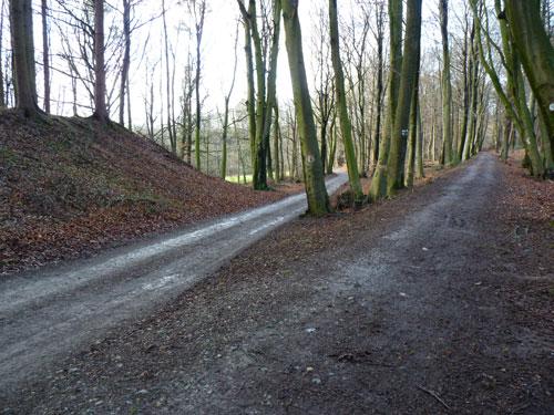 een opvallend kruispunt in het bos