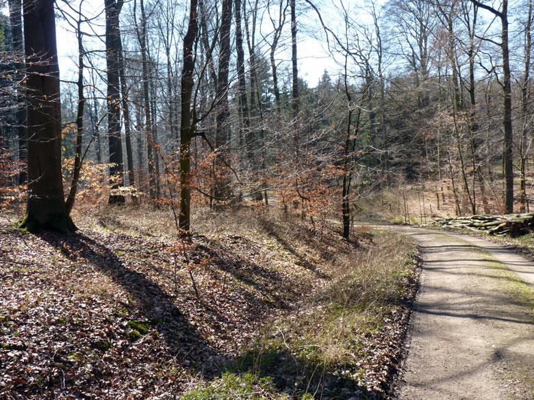 door het prachtige Habichtswald