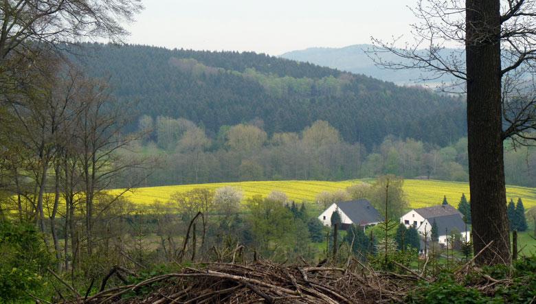 nog een doorkijkje, heel mooi die gele koolzaadvelden