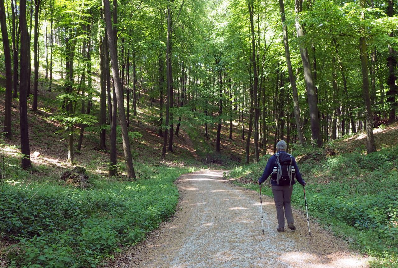 de X25 brengt ons weer in het bos