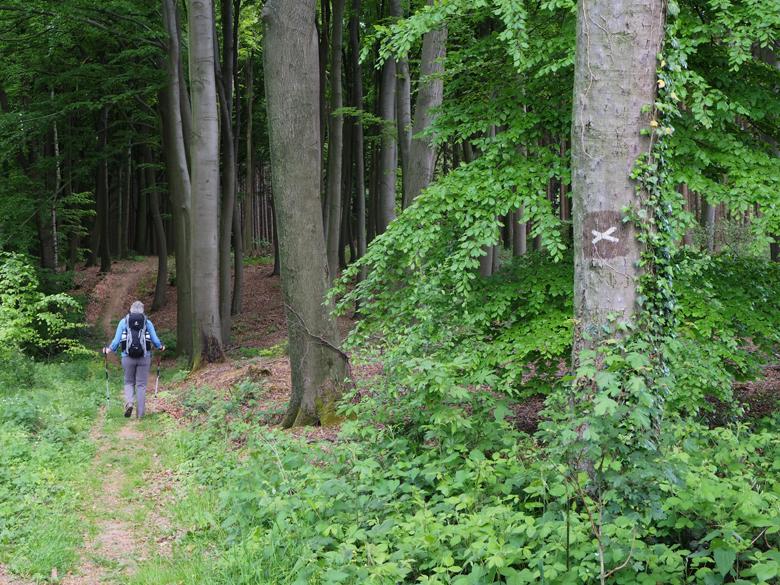 de X25 het bos in volgend