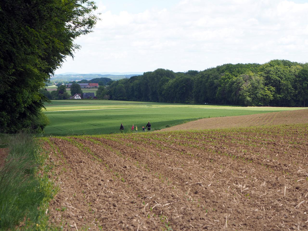 tussen akkers en grasland lopen