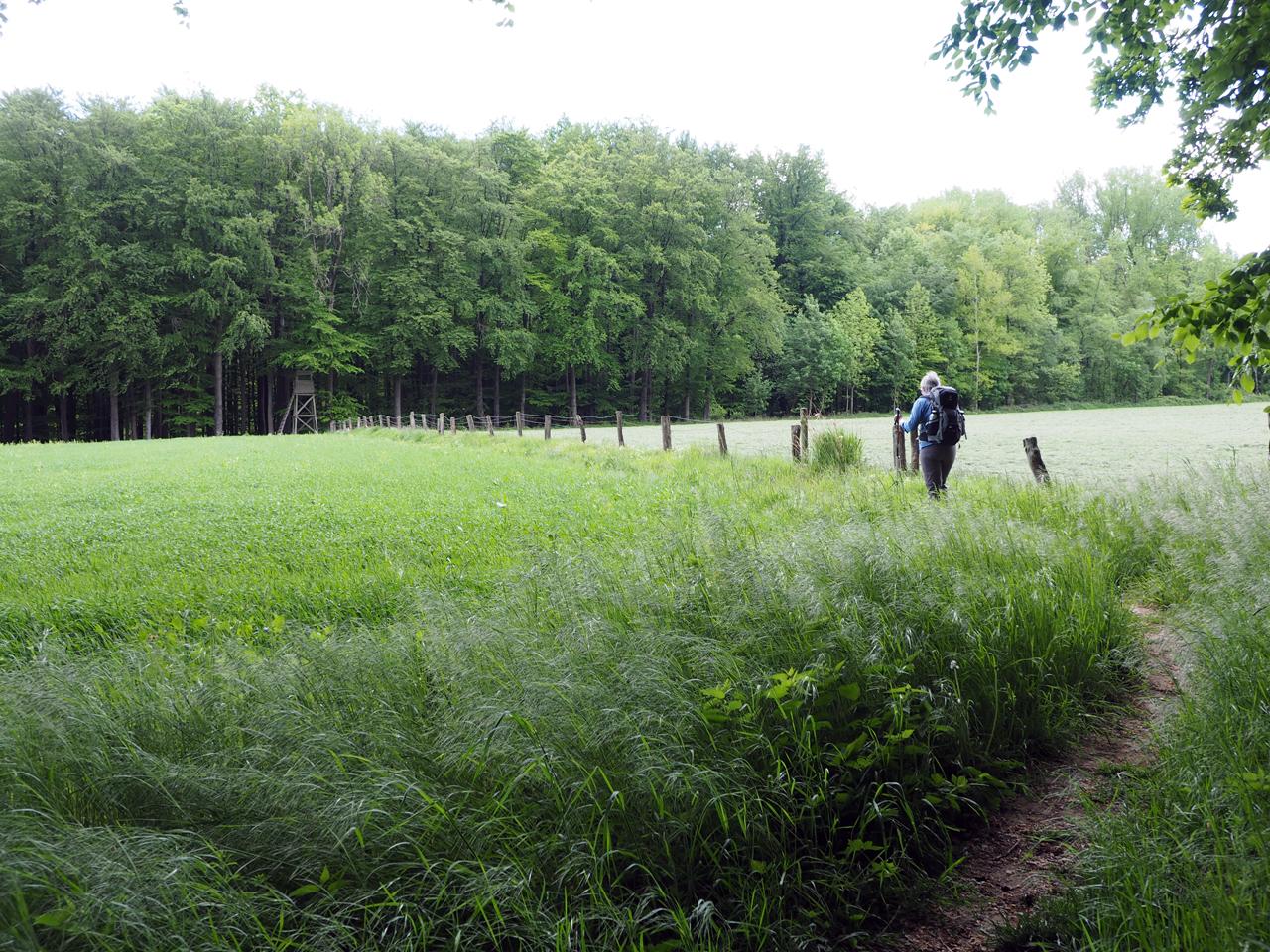 tussen weilanden door naar het bos