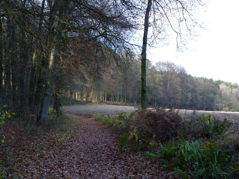 afdalen via het Trimmpfad met mooie vergezichtenalt