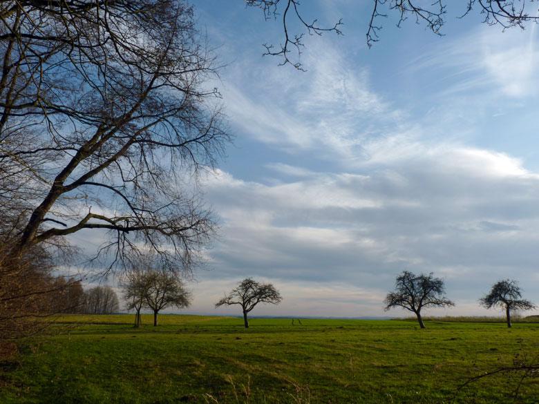 terug in het open veld