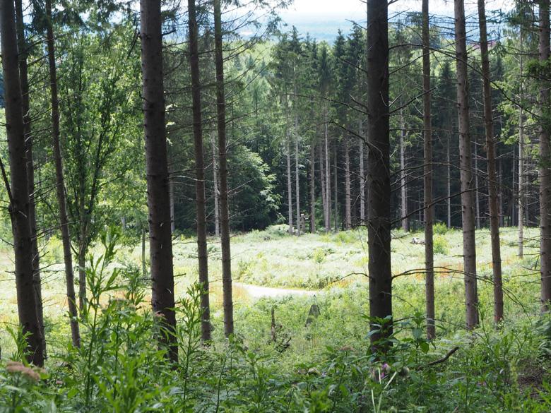 nog een open plek in het bos