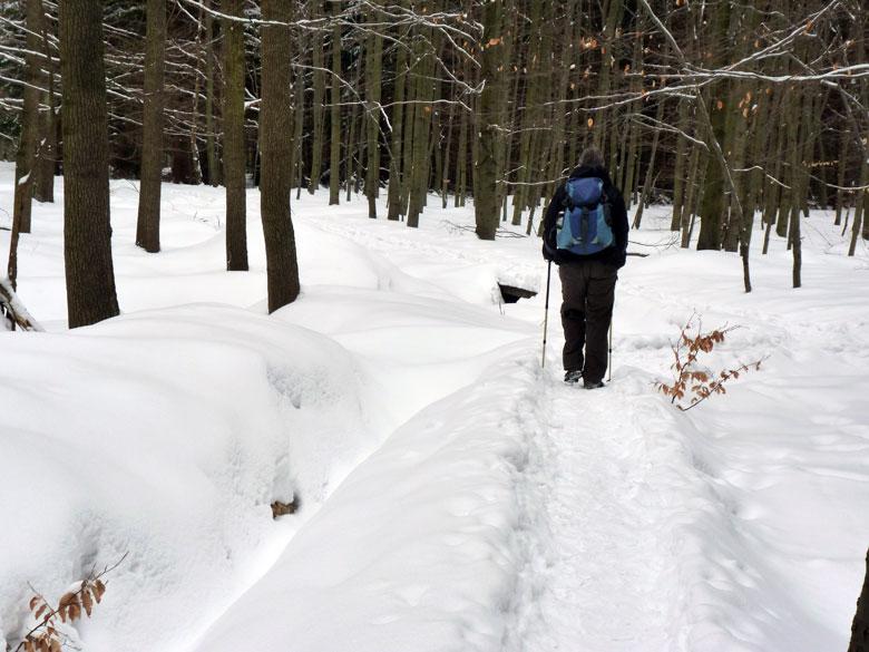een heerlijke wandeling door het afwisselende bosgebied