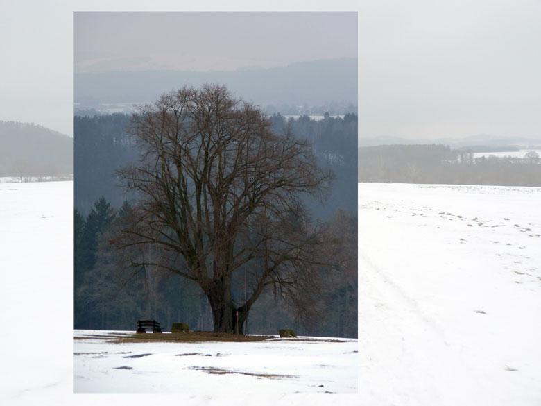 een prachtige solitaire boom in het heuvellandschap