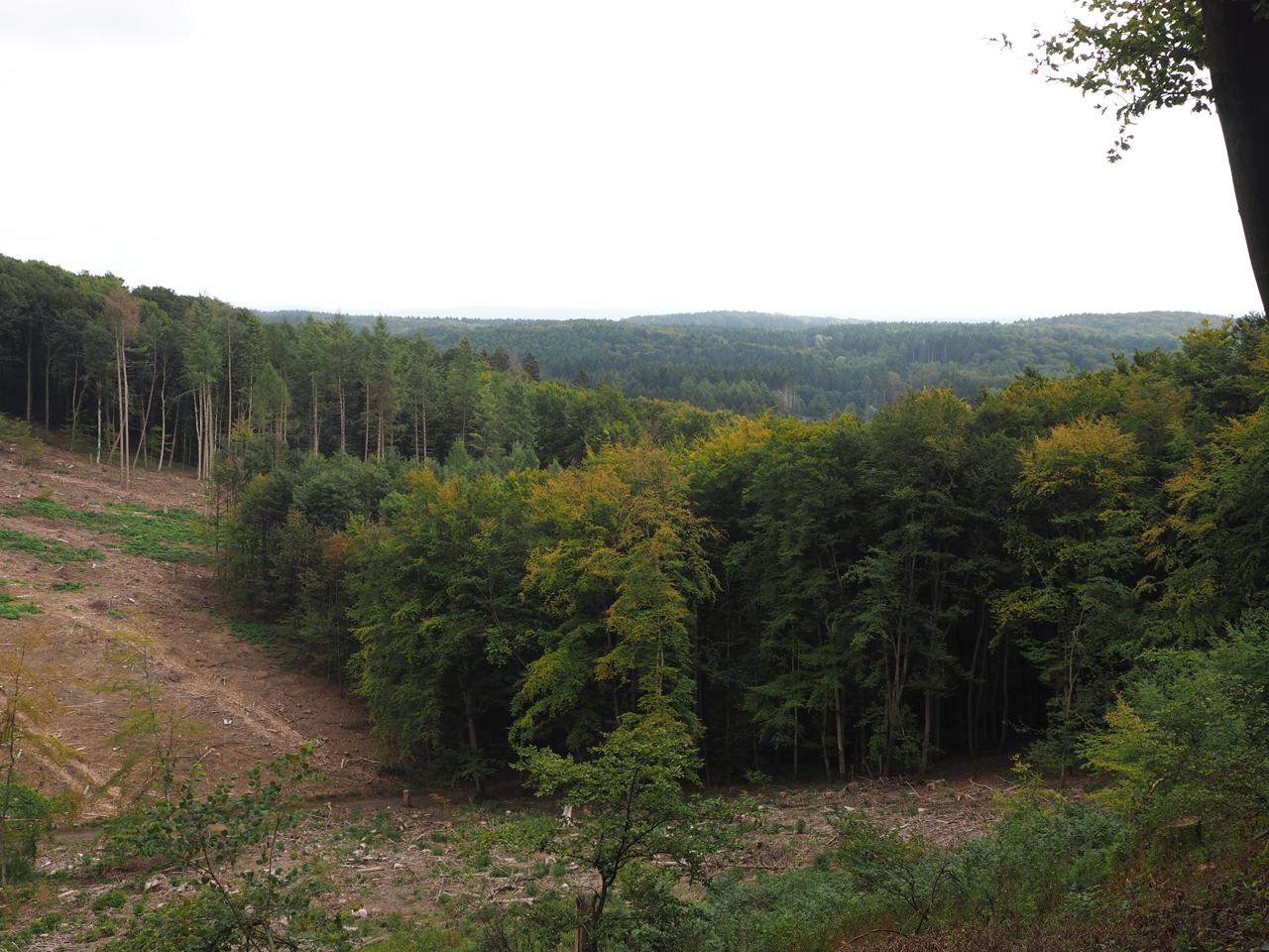 onlangs gekapte bossen