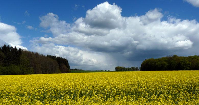 fraaie vergezichten met een gele voorgrond