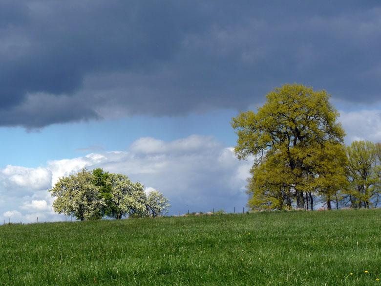 mooie kleuren in het vroege voorjaar