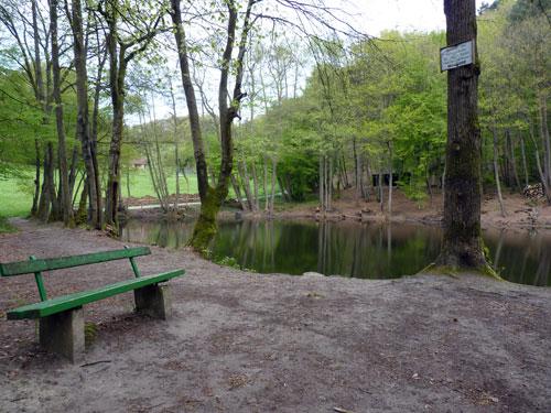 een leuk watertje in het bos bij de splitsing