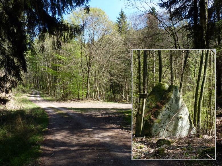 de mijter van Sinterklaas staat rechts in het bos