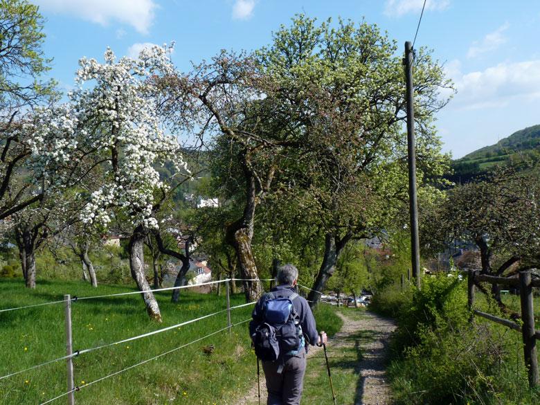 tussen boomgaarden door omlaag naar Bollendorf