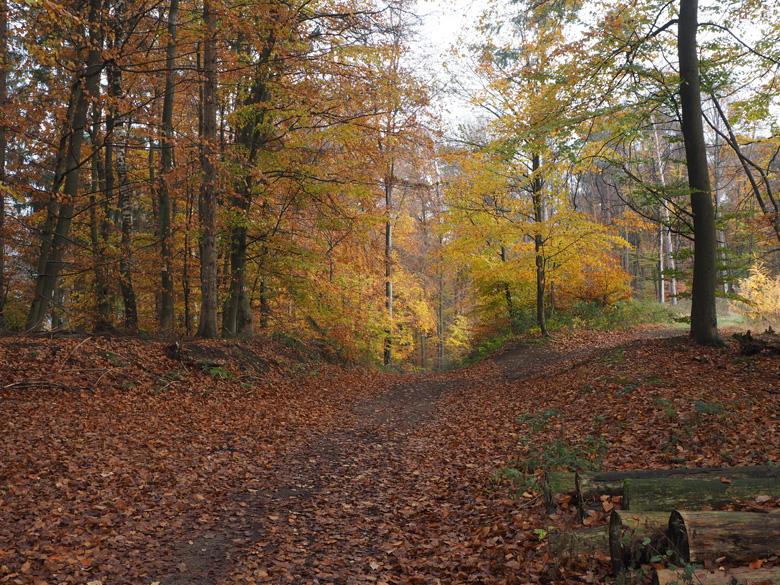 doorkijkje op de Borgberg