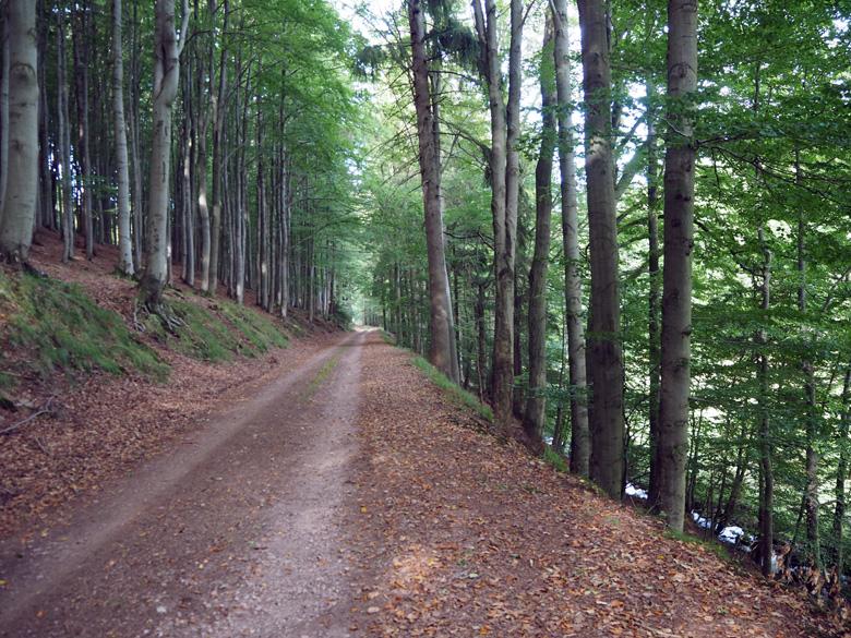 een rustige vlakke wandeling door het dal