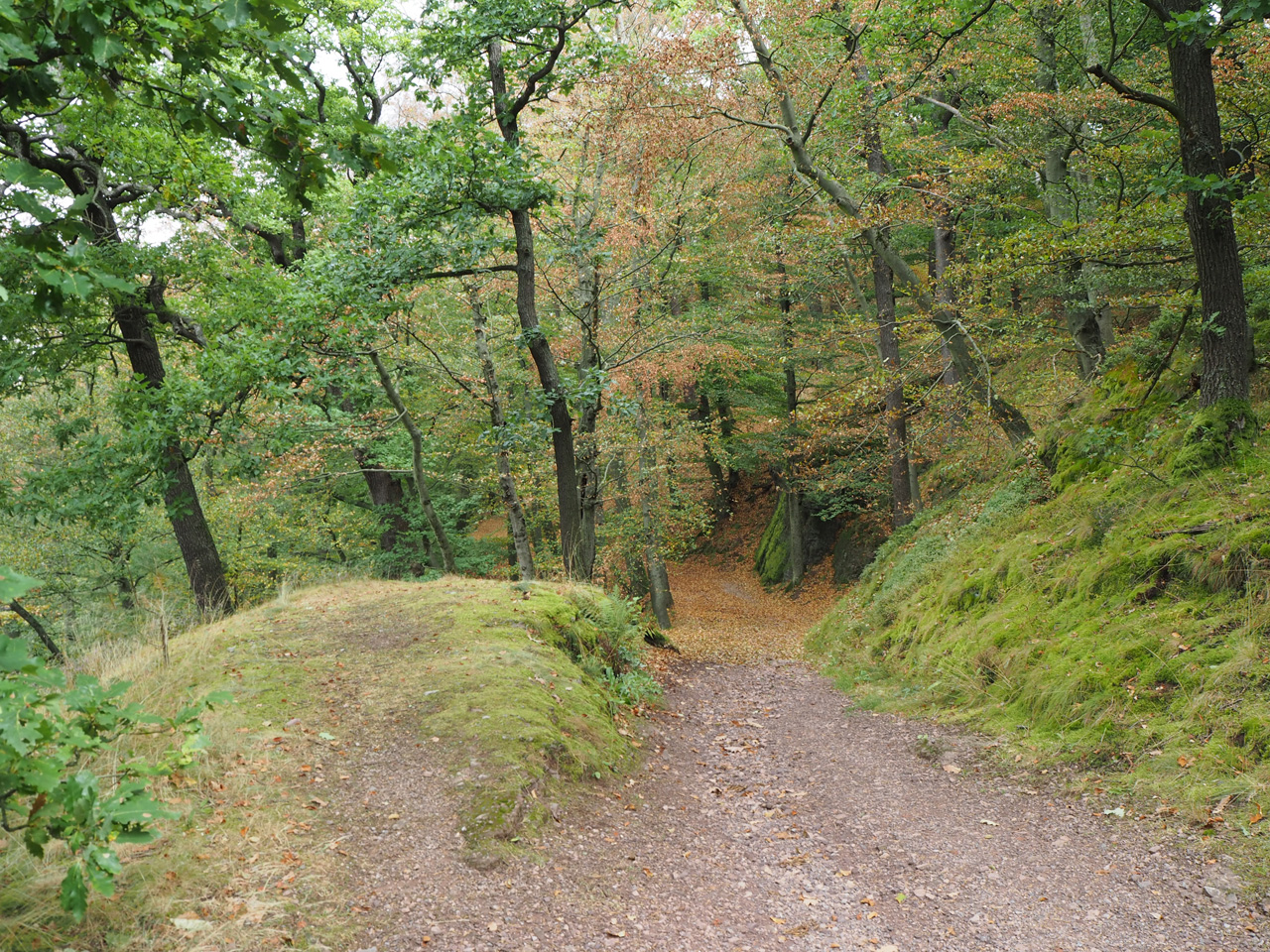 wandelpad met herfstkleuren
