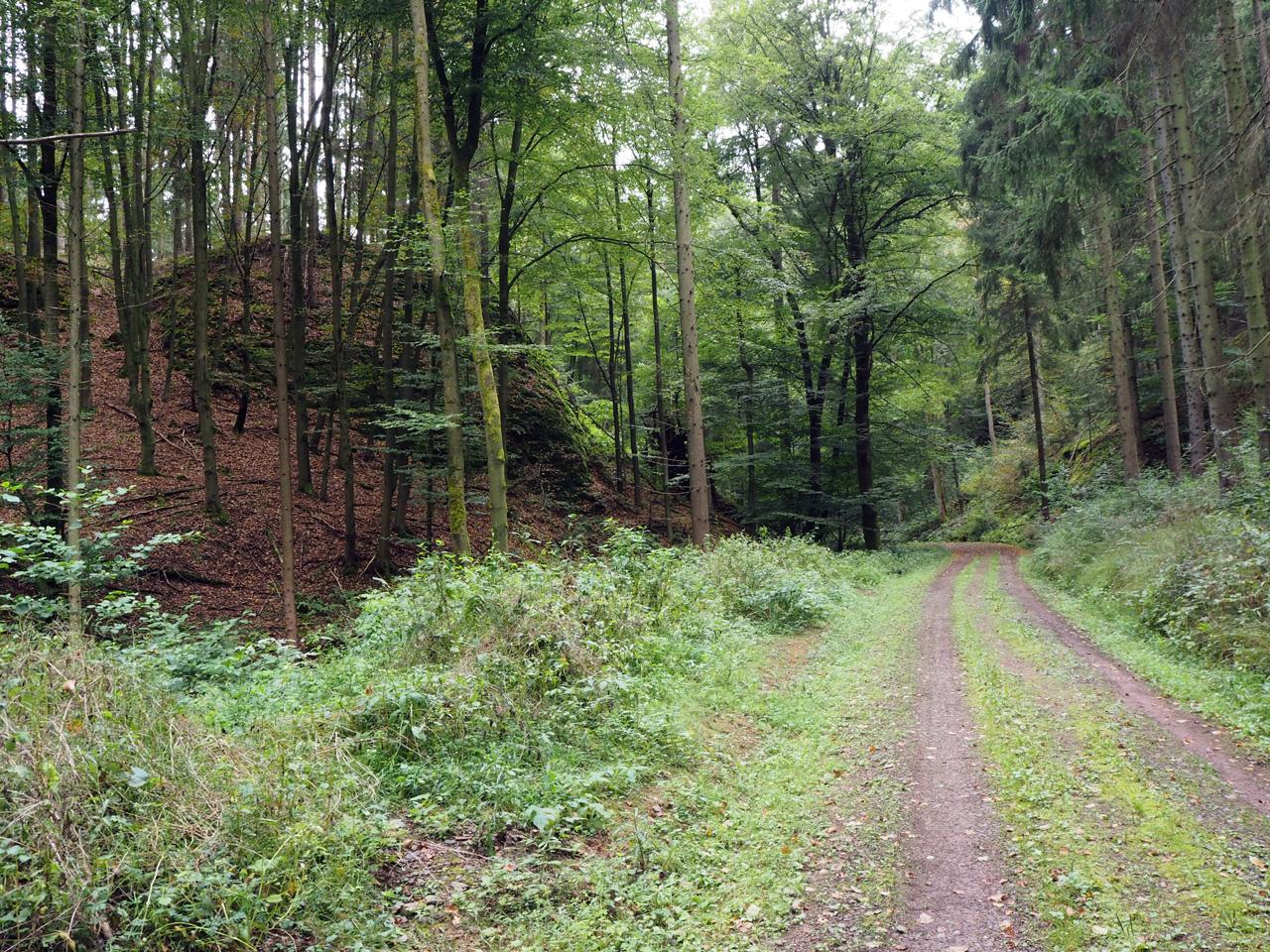 heel geleidelijk omhoog door het bos