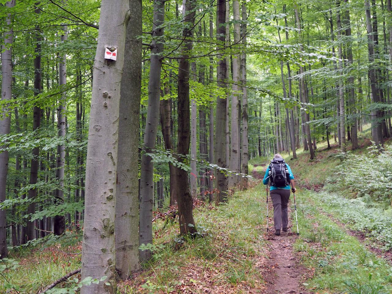rode markering omhoog naar de Kl. Inselsberg