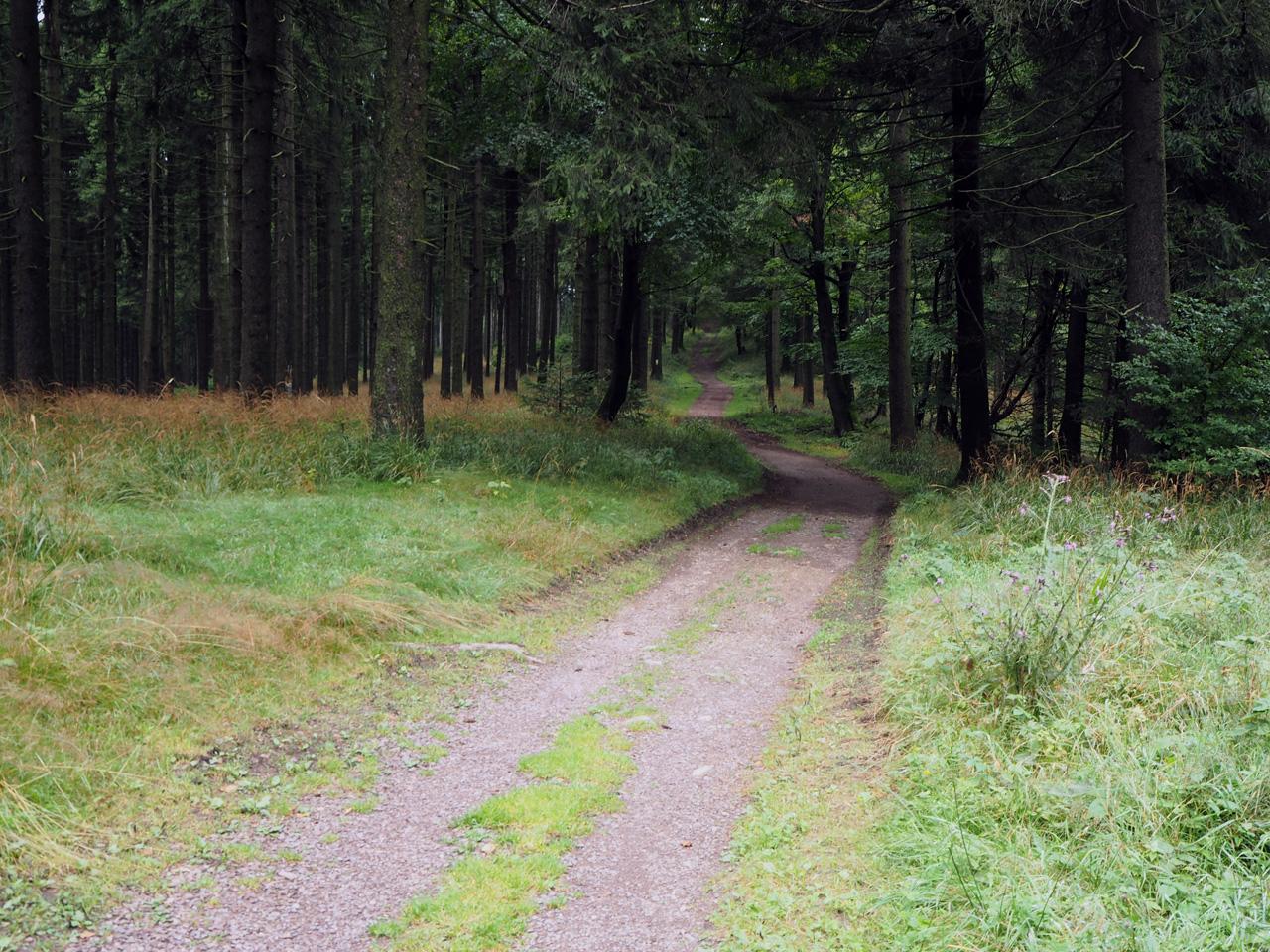 het bospad over de bergrug