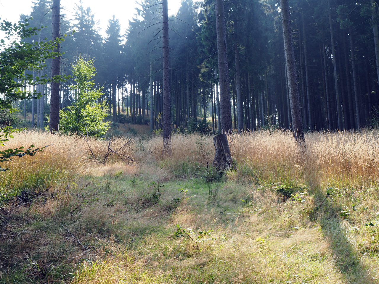 herfstkleuren in het natuurgebied