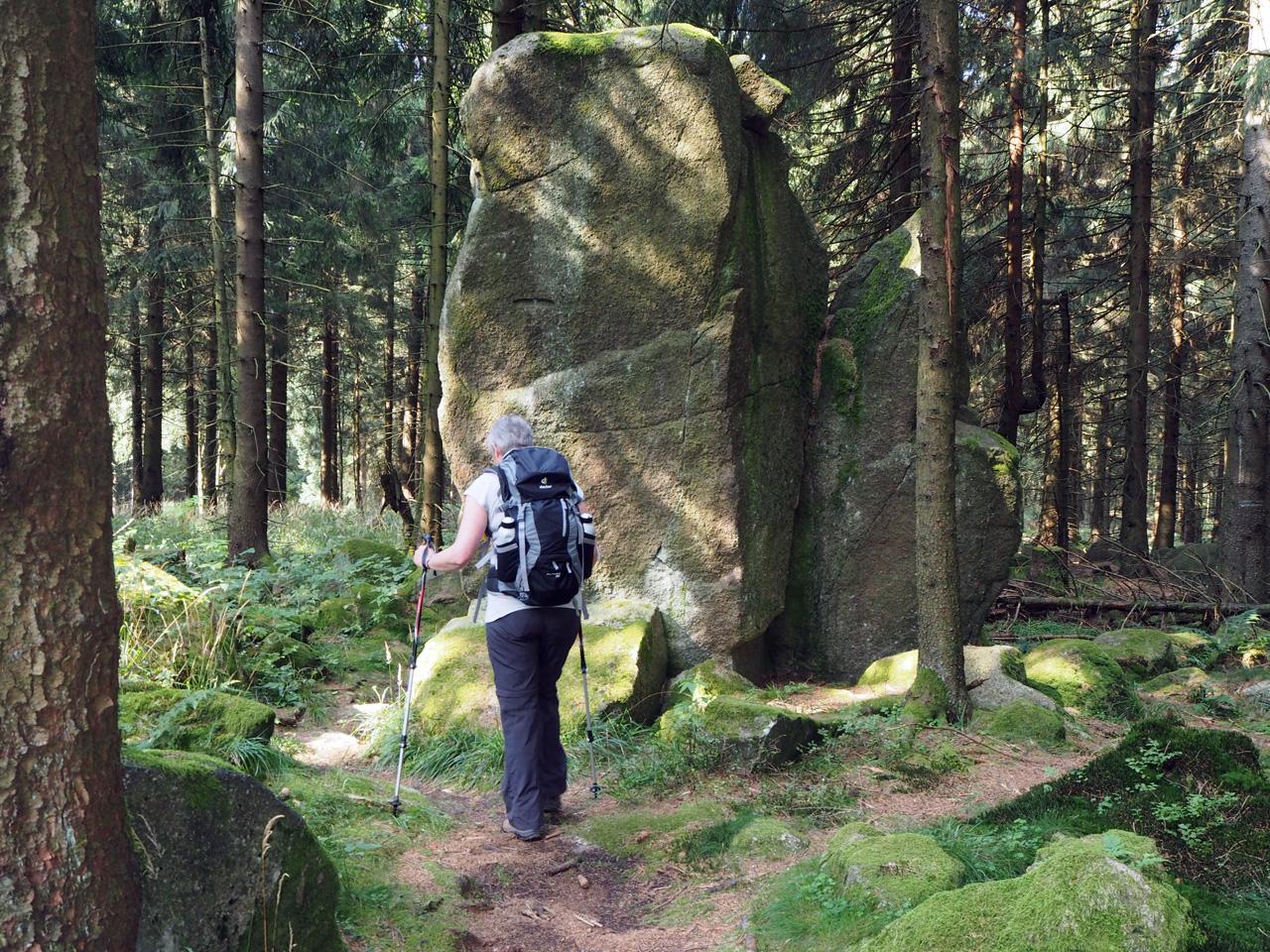 rotspartijen verspreid door het bos