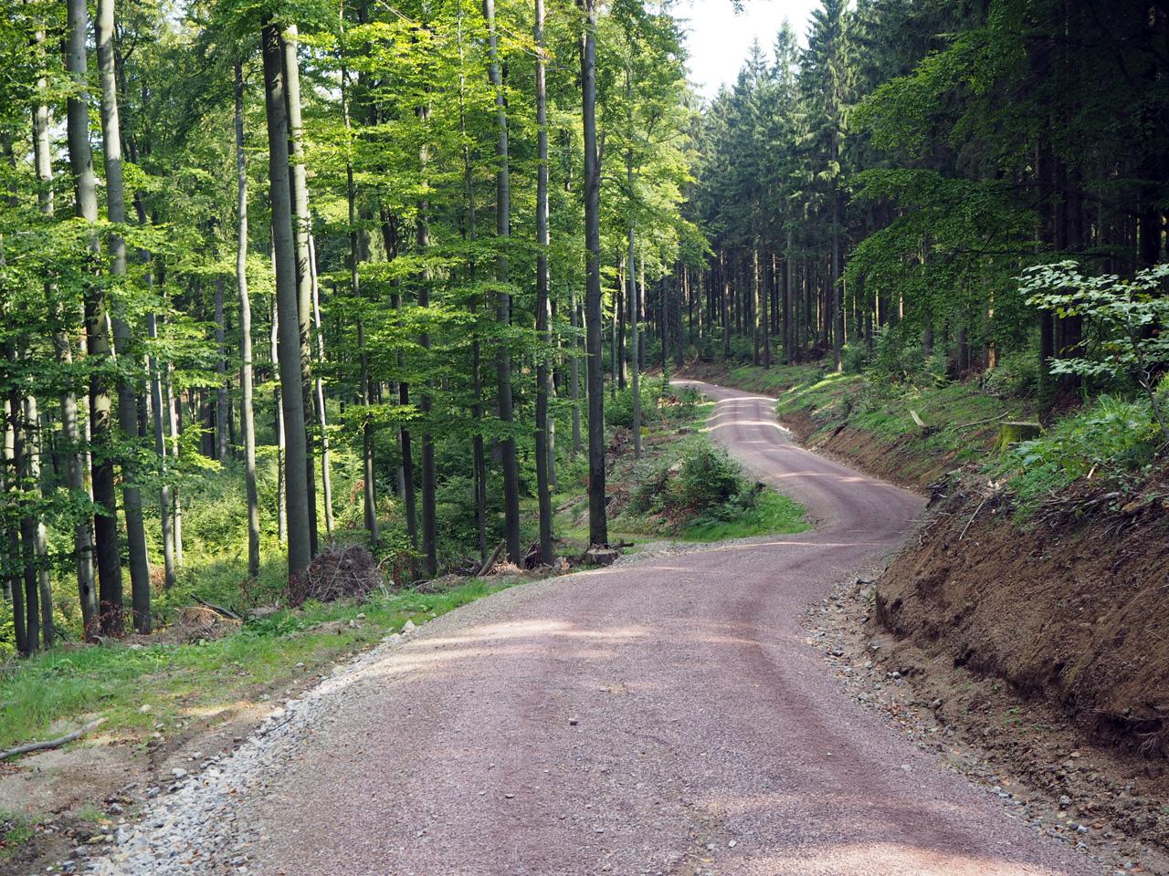 bosweg Naturpark Thüringer Wald