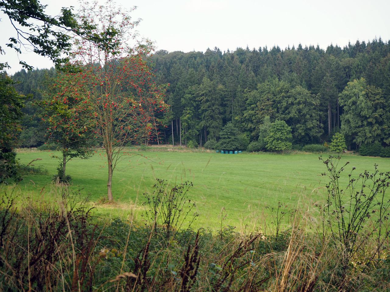een weiland midden in de bossen