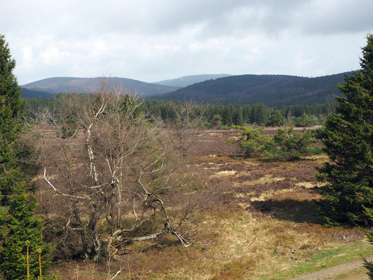 uitzicht over het heidegebied
