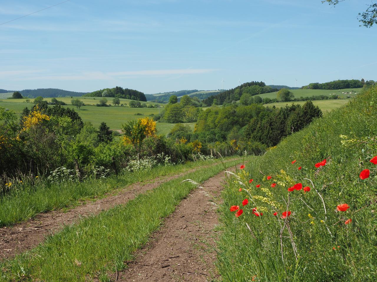 voorjaarskleuren in de Eifel