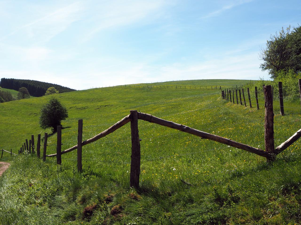 glooiende weilanden bij Wildenburg